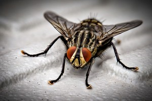 Insect Control, Pest Control in Bellingham, SE6. Call Now 020 8166 9746