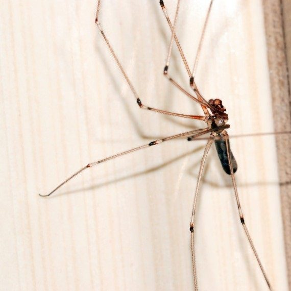 Spiders, Pest Control in Bellingham, SE6. Call Now! 020 8166 9746